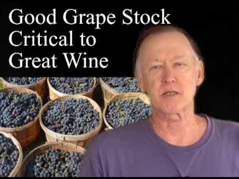 How to plant grapevines