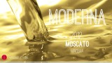 Wine Pick Of The Week: Moderna 2012 Moscato